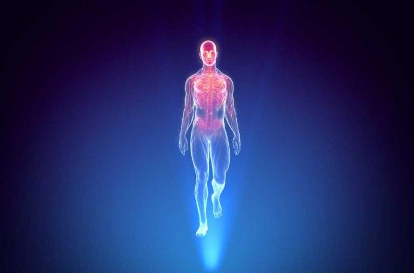 سیستمهای اصلی بدن انسان شامل چه بخش هایی است؟